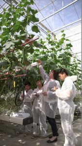 Delphy_Education_horticulture_training_led_cucumber_greenhouse_1