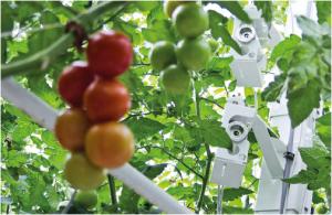 Tomato_Online_Crop_Management