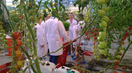 Education_courses_trainings_horticulture_tomato_roses_practical_3